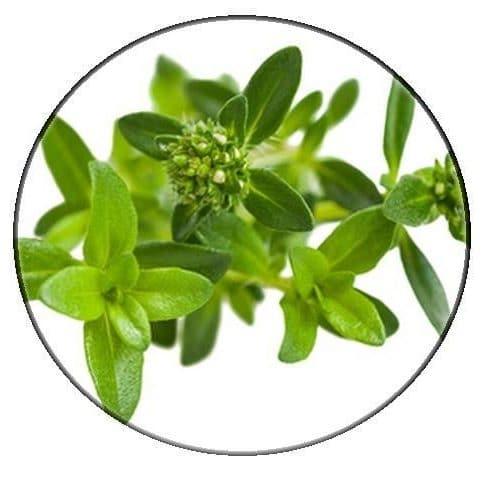 Savory essential Oil – Organic