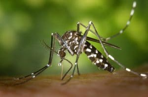 How to fight mosquitos: the tips to keep them well at bay