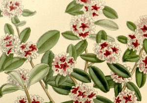 Read more about the article How to use FRAGONIA essential oil