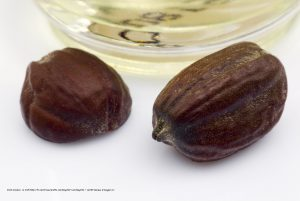 Read more about the article Jojoba oil for your skin and your hair